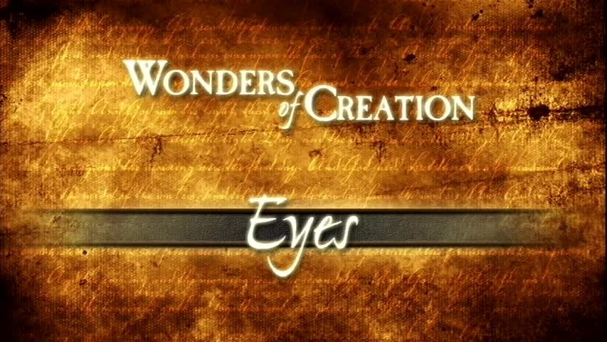 Creation Museum Collection: Life: Eyes