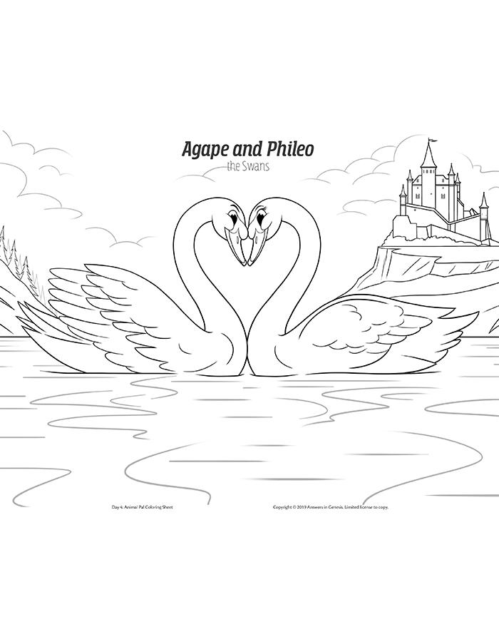 Agape and Phileo the Polish Mute Swans