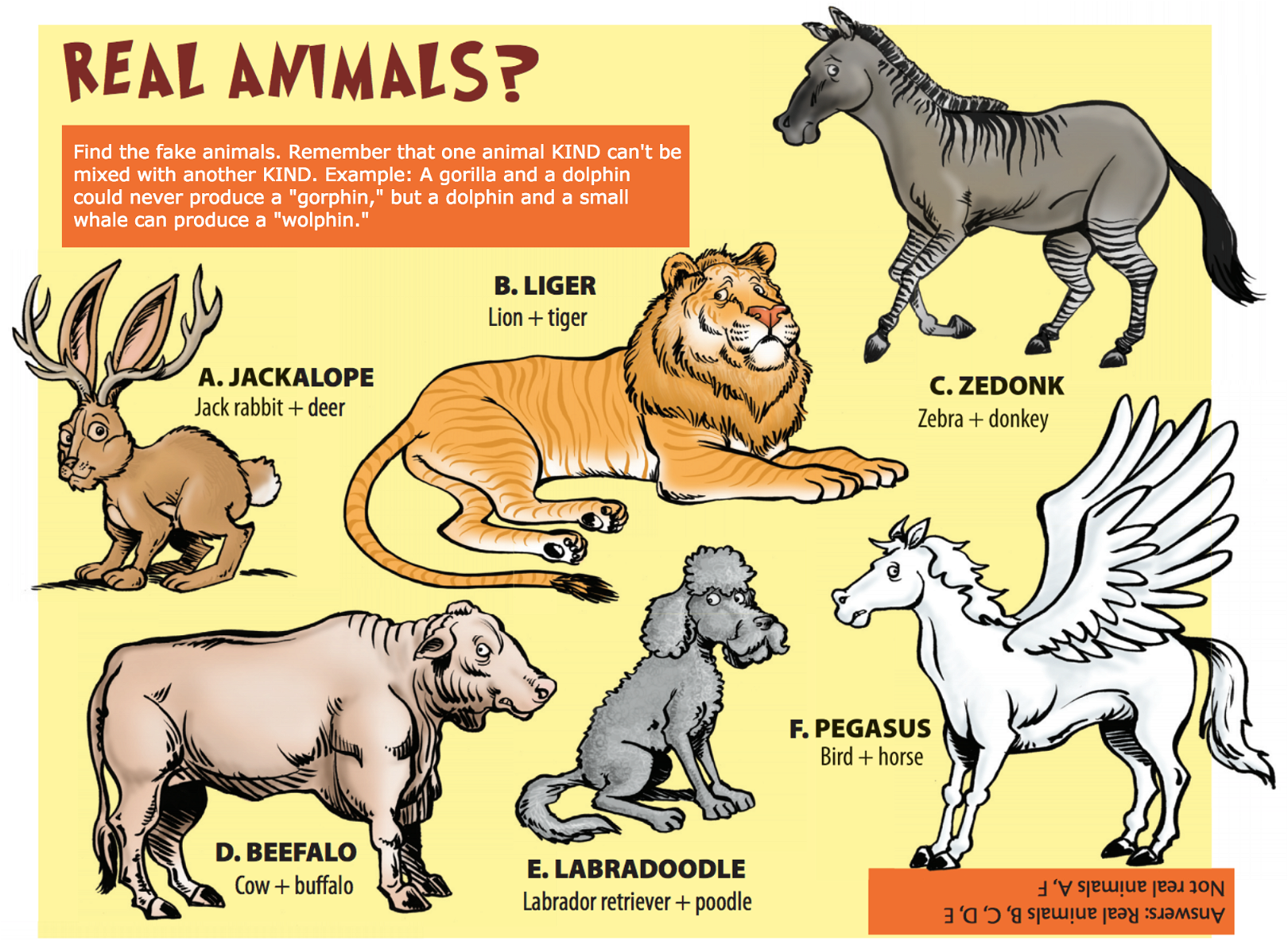 Real Animals?