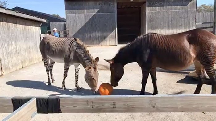 2017 Fall Enrichment at the Petting Zoo