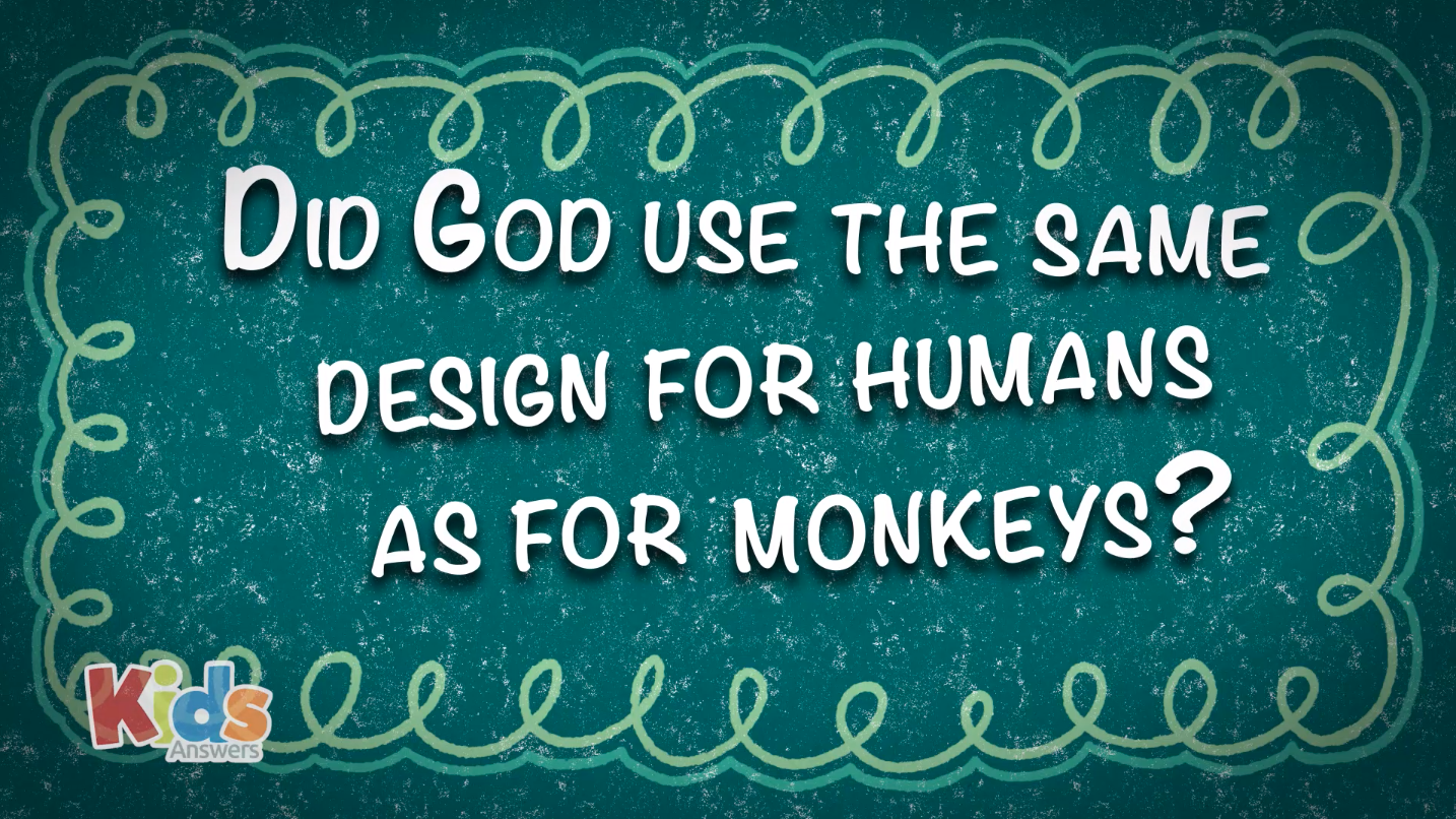 Did God Use the Same Design for Humans as for Monkeys?