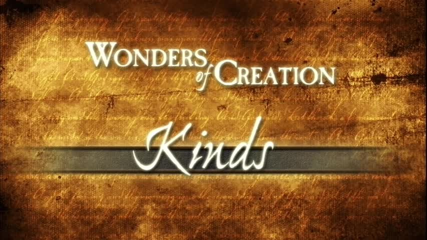 Creation Museum Collection: Life: Kinds