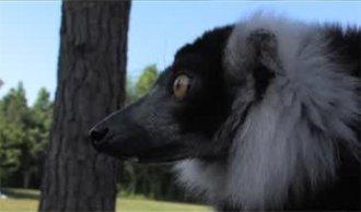 Maddy the Lemur