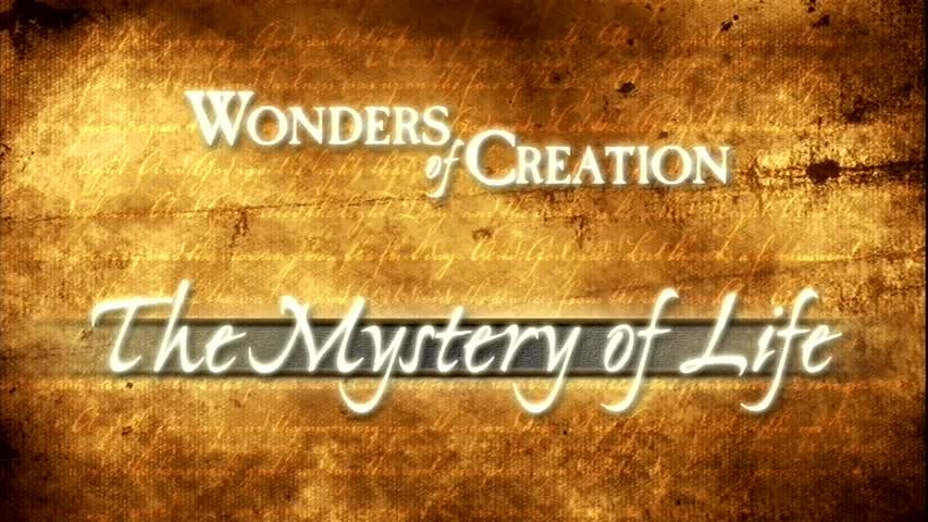 Creation Museum Collection: Life: What is Life?