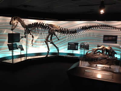 Allosaurus Exhibit