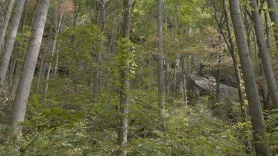Pockett Wilderness
