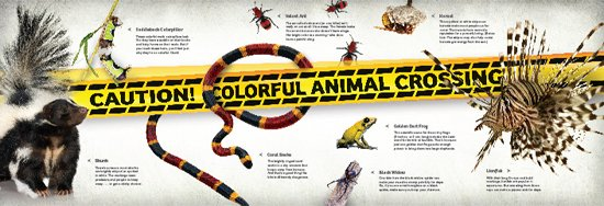 Colorful Animals Poster
