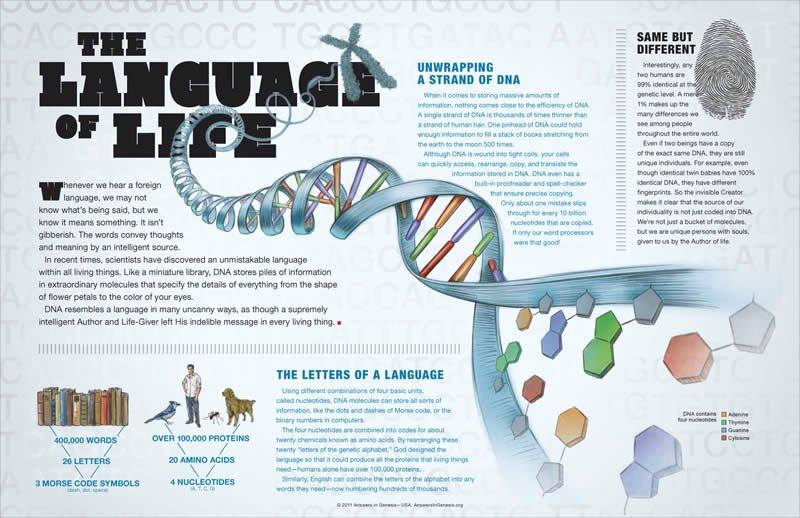 DNAThe Language Of Life Wall Chart Answers In Genesis - Language chart
