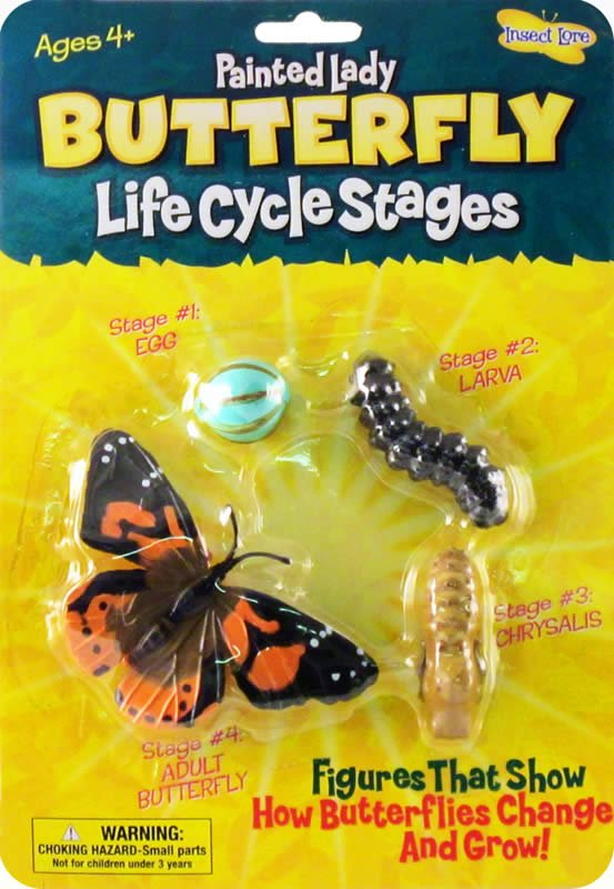 Painted Lady Butterfly Life Cycle Stages  Answers in Genesis