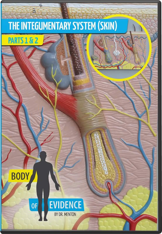 Body Of Evidence 3 Integumentary System Skin Answers In Genesis