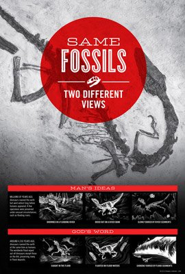 Same Fossils, Two Different Views
