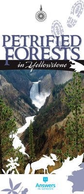 Petrified Forests in Yellowstone Brochure