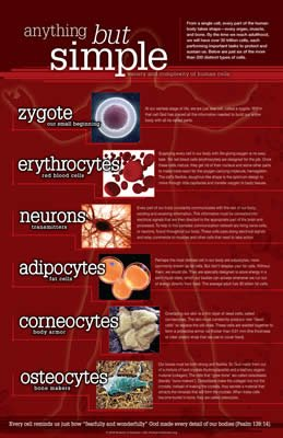 Human Cells - Anything But Simple Chart: PDF download