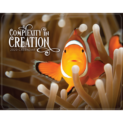 2020 Calendar: Complexity in Creation