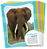 IncrediWorld VBS: Animal Posters