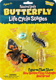 Painted Lady Butterfly Life Cycle Stages