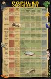 Popular Origins Beliefs Chart: PDF