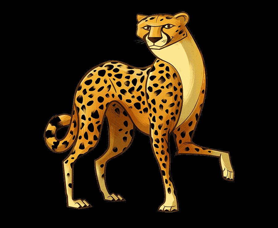 Duma the Cheetah